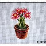 SAL z kaktusami