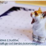 Chodź, pomaluj mój świat … kocie :)