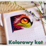 Kolorowy kot Norsvet – odsłona 1